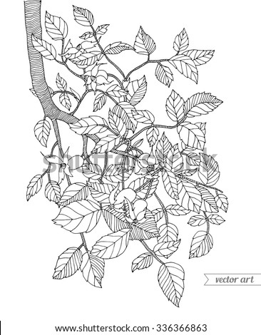 Forest tree branch with leaves, wild berries. Vector. Hand drawn artwork. Zentangle. Coloring book page for adult. Bohemia concept for cards, tickets, branding, logo, label. Black and white - stock vector