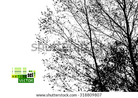 Forest trees silhouette. Vector - stock vector