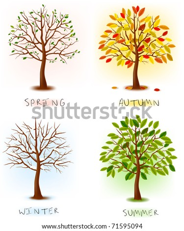 Four seasons - spring, summer, autumn, winter. Art tree beautiful for your design. Vector illustration. - stock vector