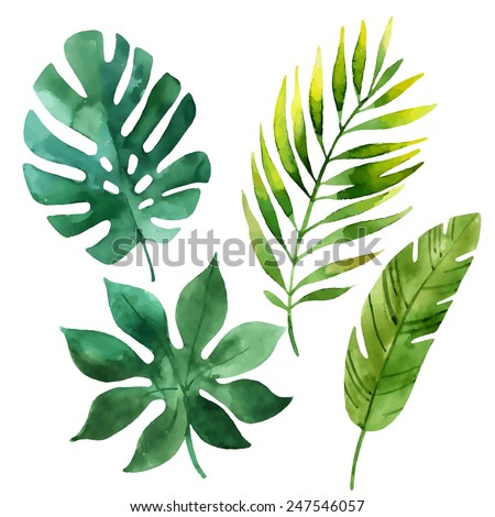 Four tropical leaves. Hand drawn leaves illustration in watercolor. - stock vector