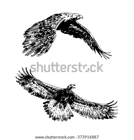 Freehand sketch of flying eagle. Hand drawn on white background. Vector illustration  - stock vector
