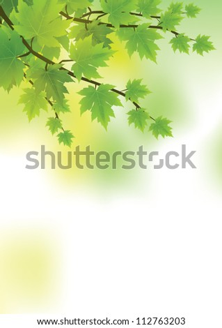 fresh and green leaves vector - stock vector