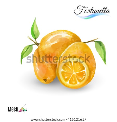 Fresh fruit fortunella isolated on white background - stock vector