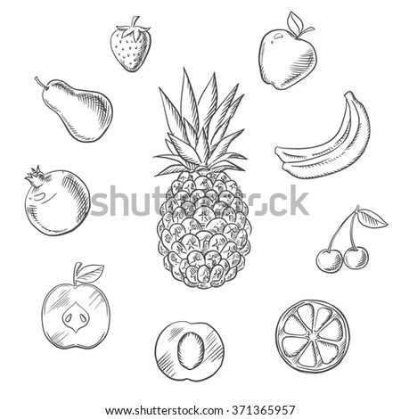 Fresh fruits and berries with tropical pineapple, surrounded by whole and sliced apples, orange, apricot, lemon, bananas, pear, pomegranate, strawberry and cherry. Vector sketch - stock vector