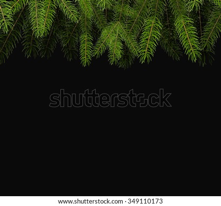Fresh green fir branch close up with copy space isolated on black background - stock vector