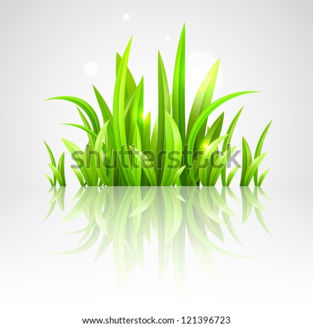 fresh green grass vector illustration - stock vector