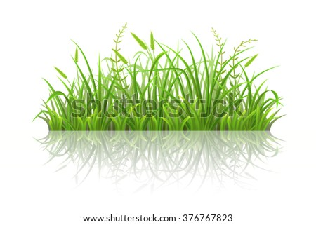 Fresh green grass with reflection on white background - stock vector