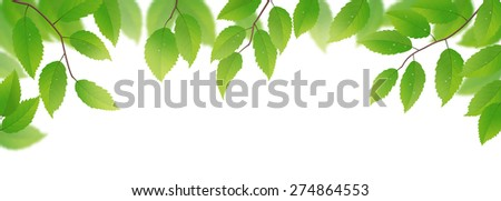 Fresh green leaves isolated on white background, vector illustration - stock vector
