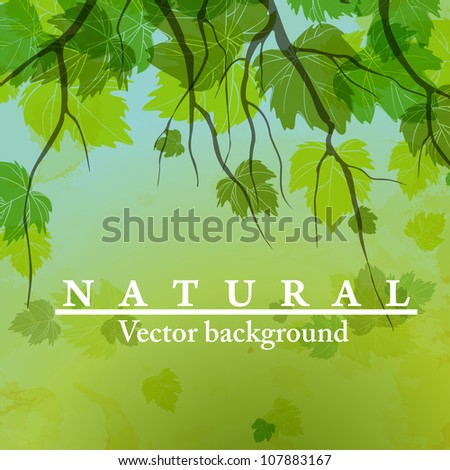 Fresh green leaves on natural background. Vector illustration. Eps 10. - stock vector