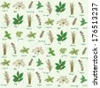 Fresh herbs background vector - stock vector