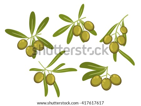 Fresh italian green olives icons of olive tree branches with gray- green leaves and ripe fruits. May be used as olive oil packaging or vegetarian healthy food design - stock vector