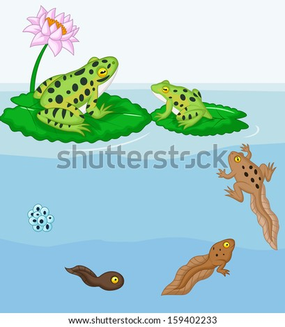 Frog metamorphosis - stock vector