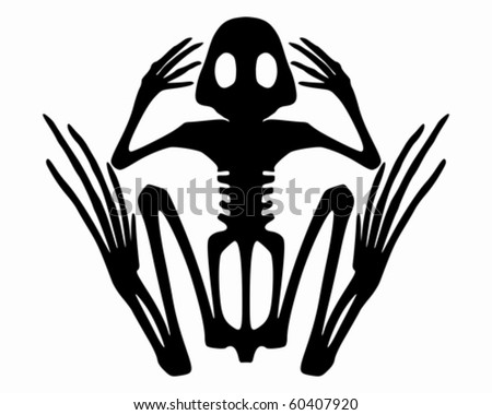 Frog Skeleton Drawing Frog Skeleton Stock Vector