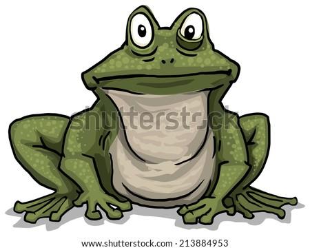 Frog, vector illustration - stock vector