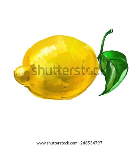 fruit lemon Vector illustration  hand drawn  painted watercolor  - stock vector