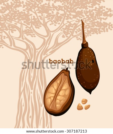 Fruit of baobab - fruit with seeds on a silhouette of baobab tree. Botanical image. - stock vector