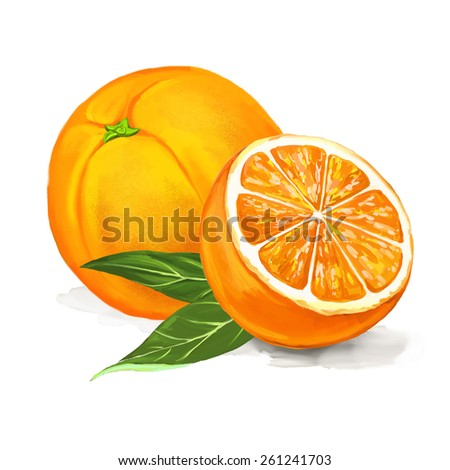 fruit orange vector illustration  hand drawn  painted watercolor - stock vector