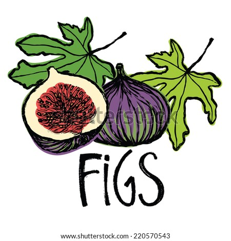 Fruits and leaves figs Design card - stock vector