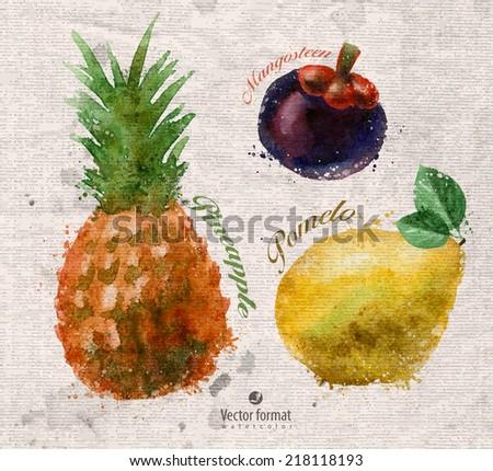 Fruits. Watercolor. Vector format - stock vector