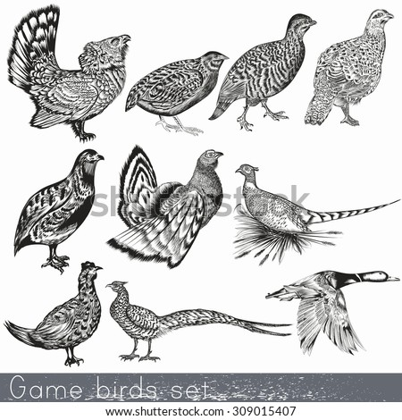 Game birds set in engraved vintage style hand drawn - stock vector
