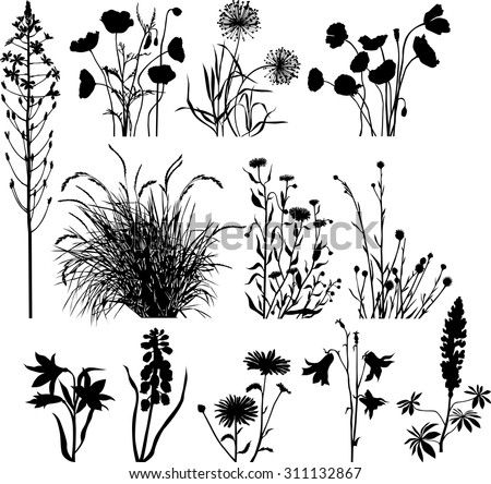 Garden and wild plants - stock vector