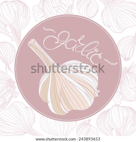 Garlic drawing. Realistic garlic bulb and lettering in round frame. Background with different garlic bulbs. - stock vector