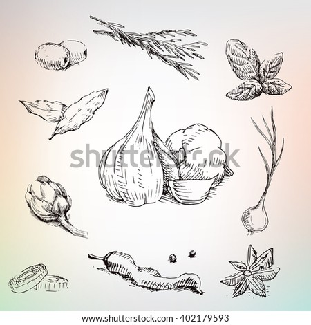 Garlic, onion, olives and herbs. Lot of spices in collection. Big set - stock vector