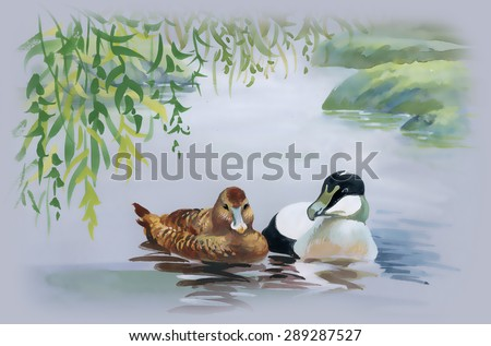 Geese flock swimming on pond watercolor vector illustration - stock vector