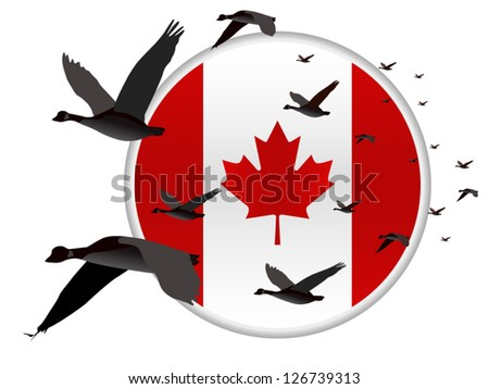 Geese flying past a Canadian Flag - stock vector