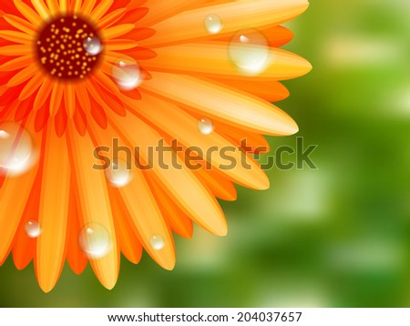 Gerber petals with water drops on garden background. plus EPS10 vector file - stock vector