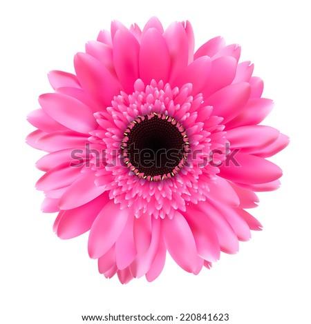 Gerbera Flower Isolated on White Background Vector Illustration  - stock vector
