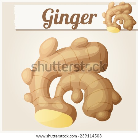 Ginger. Detailed Vector Icon. Series of food and drink and ingredients for cooking. - stock vector