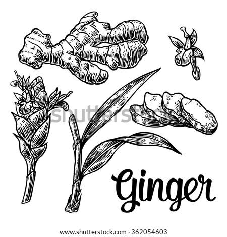 flower roots stock vectors  u0026 vector clip art