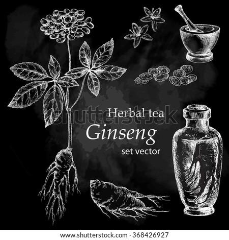 Ginseng plant, botanical drawing. Herbal tea  set. Hand drawn.  Medicinal plant. Chalkboard background. - stock vector
