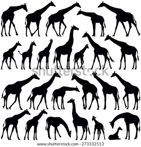Giraffe collection - vector silhouette - stock vector