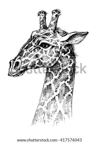 Giraffe head - stock vector