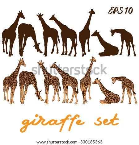 Giraffe set. Vector illustration - stock vector