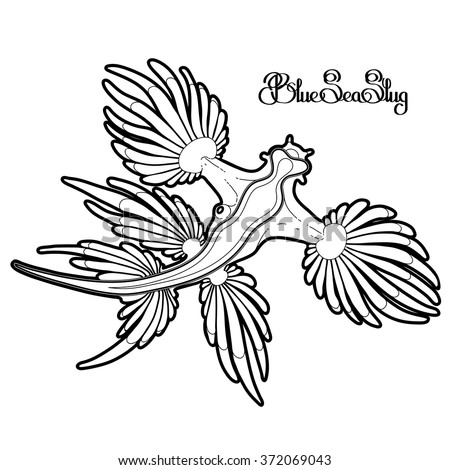 Nudibranch Coloring Page
