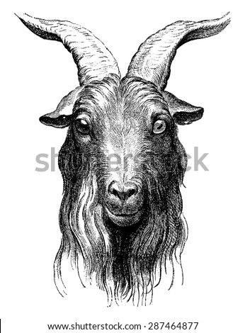 Goat, vintage engraved illustration. Earth before man - 1886. - stock vector