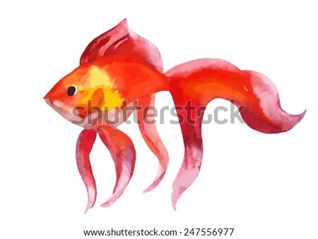 Gold fish - vector watercolor illustration - stock vector