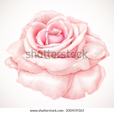 Gorgeous pink rose. Vector illustration - stock vector