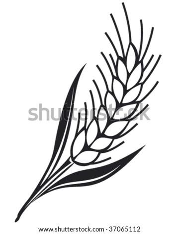 grain ear vector illustration - stock vector