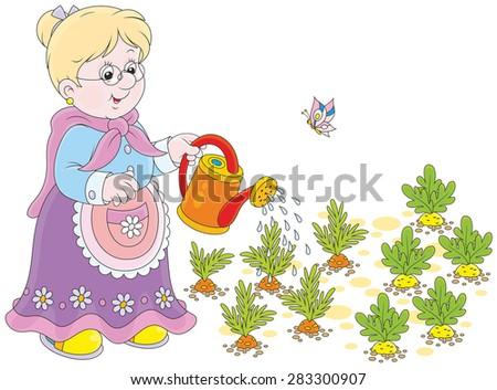 Grandmother watering carrots and radish in her vegetable garden - stock vector