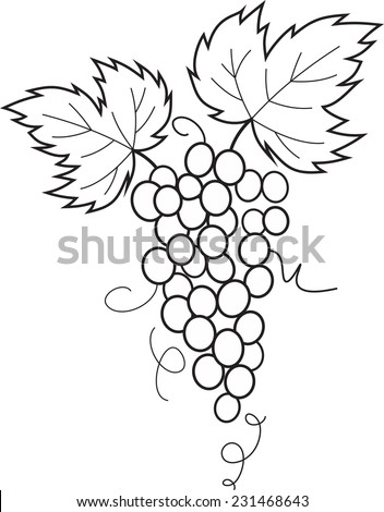 Grapes vines leaves vector - stock vector