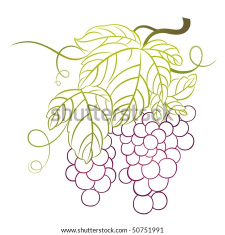 grapes with leaves - stock vector