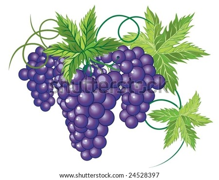 grapevine - stock vector