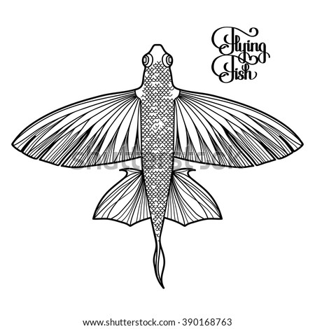 Graphic flying fish drawn in line art style. Top view. Sea and ocean creature isolated on white background. Coloring book page design for adults and kids - stock vector