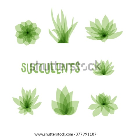 Graphic Set of succulents isolated on white background for design of cards, invitations. Vector illustration - stock vector