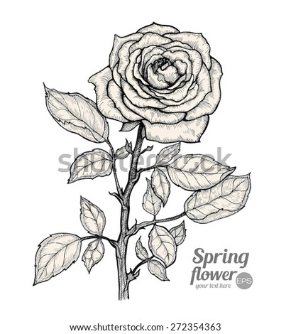 Graphic vector illustration of rose on a white background. Hand drawn artwork. Love concept for wedding invitations, cards, tickets, congratulations, branding. Gift for young girl and women - stock vector