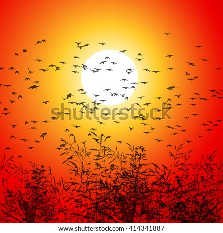 grass background sunset with flying birds. Vector - stock vector